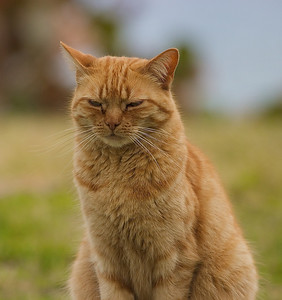 Old Bermuda cat.