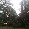 A large cedar on the west side of the central quad was sheared off mid-trunk.
