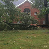 Oaks down in front of Haygood residence hall.