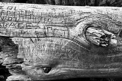 Graffiti Log- Yosemite, CA