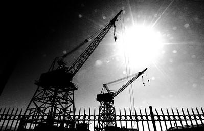 Cranes in the Sun