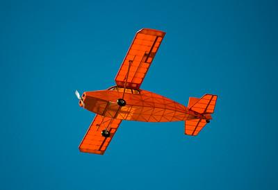 Level-Flying Cougar- Crazy Creek, CA