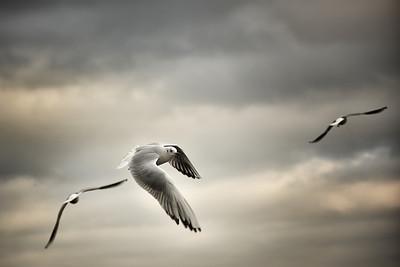 Loving birds!