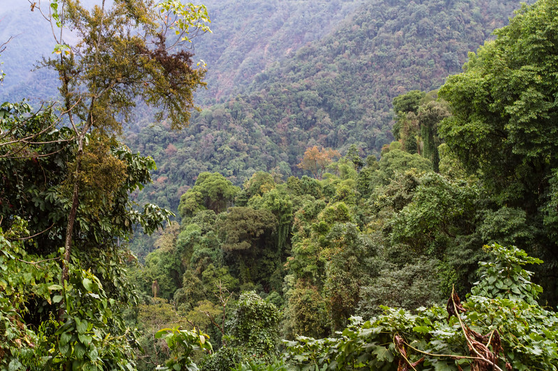 dense tree cover