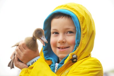 West /  Sunday June 19th 2016 Welsh Game Fair, Pembrey Evian Davies from Llanelli holding a one week old duck.