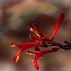 WarrenL_Contemplating Deser Blooms