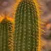 WarrenL_Contemplating_the_Desert