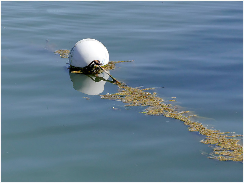 Contemplative Photography Assignment: Slow Down - What Stopped Me - Buoy