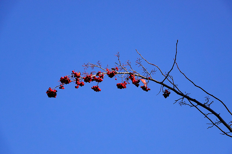 Contemplative Photograophy - Marin Art and Garden: Wood 3