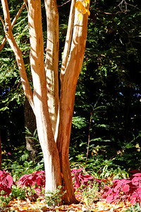 Contemplative Photograophy - Marin Art and Garden: Wood 5