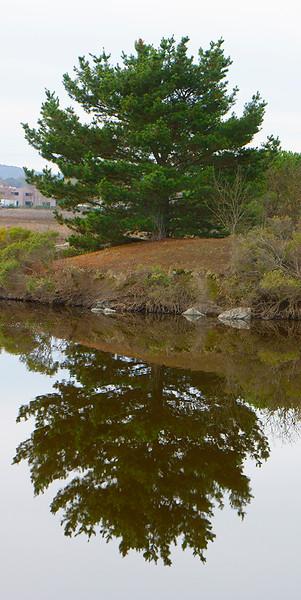 Pacheco Pond 2