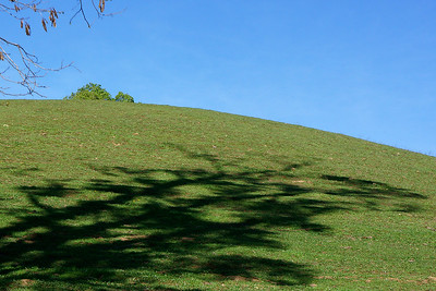 St Vincent Tree Shadow 1