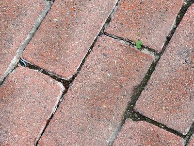 Weed in Bricks