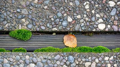 Moss and a Leaf
