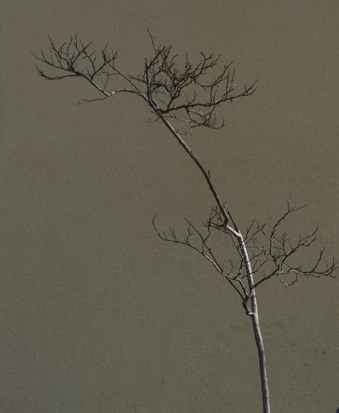 A Branch on the Wall