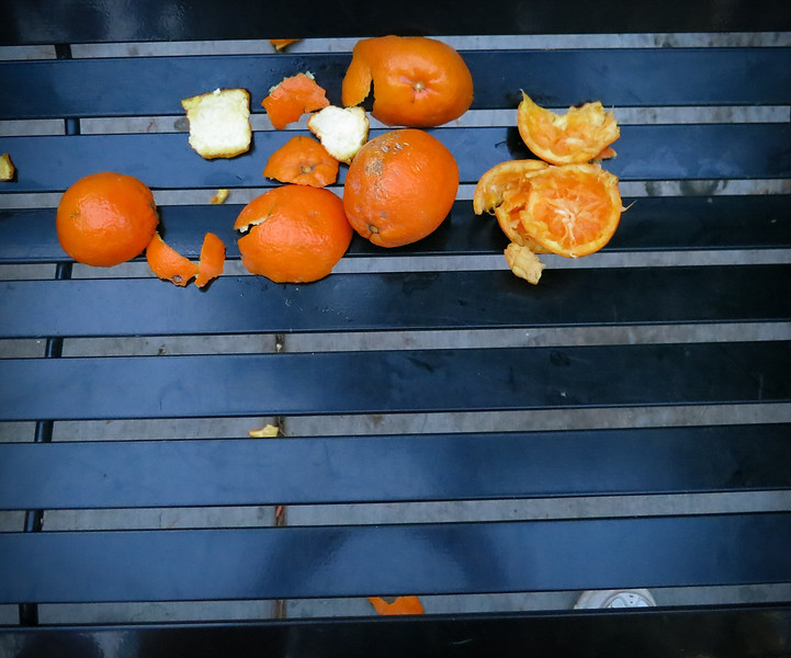 Oranges on Bench