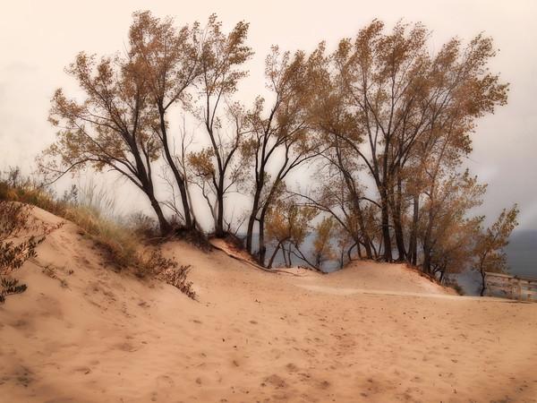 Dune Drifts