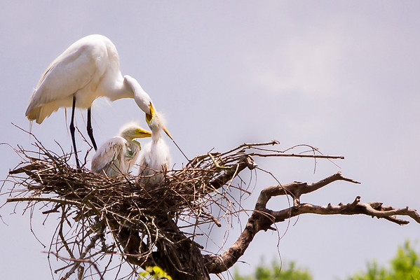 A great mom with the best nest.