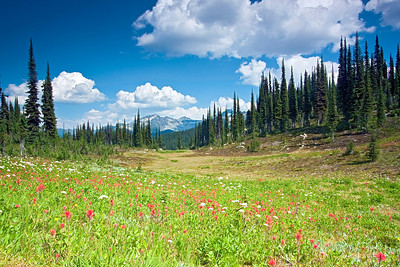 Mt. Revelstoke National Park Canada