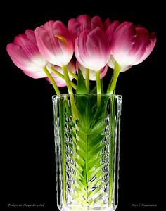 Tulips in Hoya Crystal.