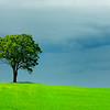 Green tree and fields under stormy sky.