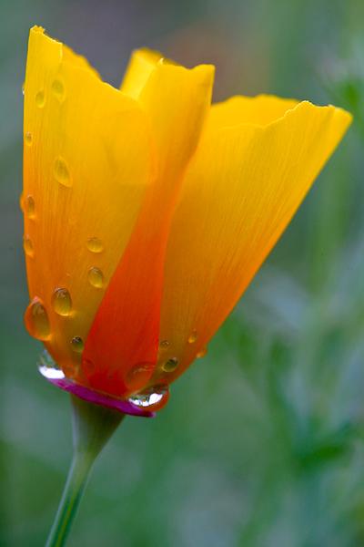 BT Flowers Yellow No. Macrostudien ©  Dirk Heckmann