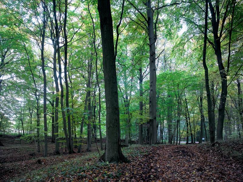 Buchenwald in Mecklenburg Buchenwald in Mecklenburg