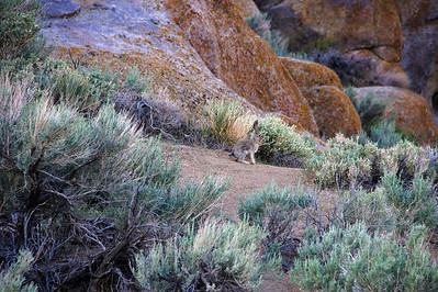 11_05_07 Eastern Sierra 0006