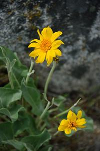 11_05_08 Eastern Sierra 0163