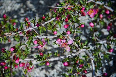 11_05_08 Eastern Sierra 0206