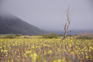 11_05_08 Eastern Sierra 0057