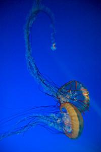 07_12_28 d3 test aquarium 0129