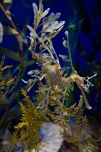 07_12_28 d3 test aquarium 0686