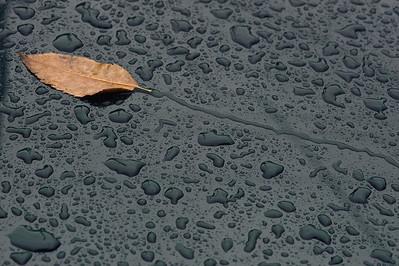 10_01_18 a walk in the rain 0517