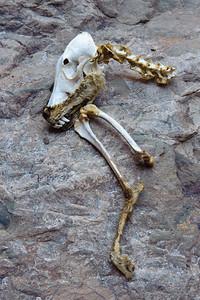 09_11_14 Canyoneering Death Valley 0575