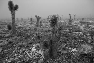 09_02_16 Death Valley Winter 0608