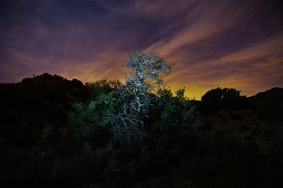 11_12_30 Joshua Tree New Years 2012 0231