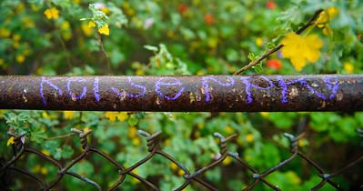 11_12_30 Joshua Tree New Years 2012 0049