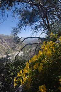 10_06_06 canyoneering bonita canyon 0011