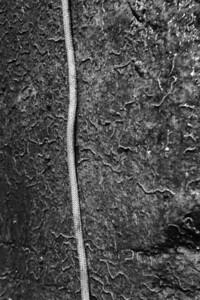 09_08_08 Canyoneering Rubio 0259