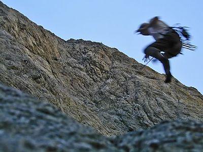 John Yang flying off the crux the Shaman, 511a Generation Wall, Williamson Rock