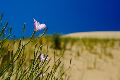 10_05_31 kelso dunes 0152