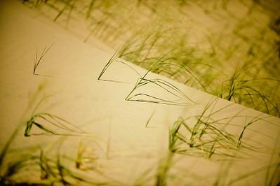 10_05_31 kelso dunes 0045