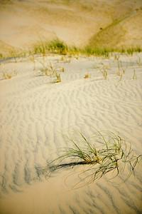 10_05_31 kelso dunes 0136