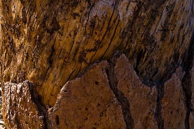 08_04_06 Mt. Gleason 0096