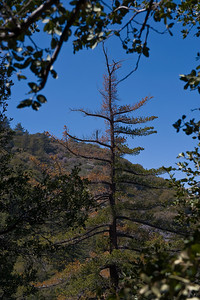 08_04_06 Mt. Gleason 0034