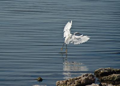 09_10_03 Salton Sea and Triathlon 0220