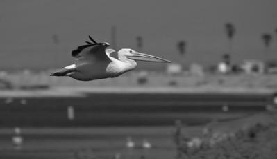 09_10_03 Salton Sea and Triathlon 0071