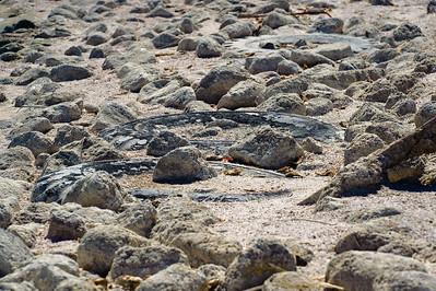 09_10_03 Salton Sea and Triathlon 0153
