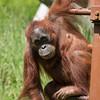 Loc=Jersey Zoo,,Trinity,Jersey